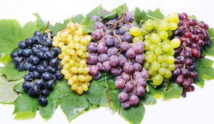 Водещи сортове грозде  (флагман)