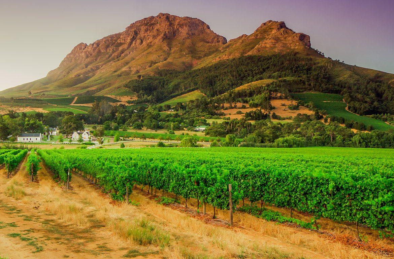 южноафрикански вина
